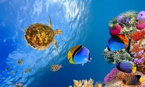 мальдивы коралы