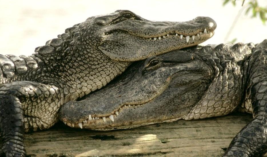 Крокодиловая-ферма-в-Паттайе