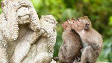 Обезьяны Шри Ланки