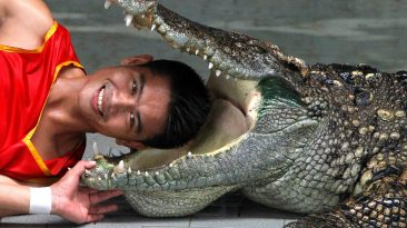Паттайа ферма крокодиилов
