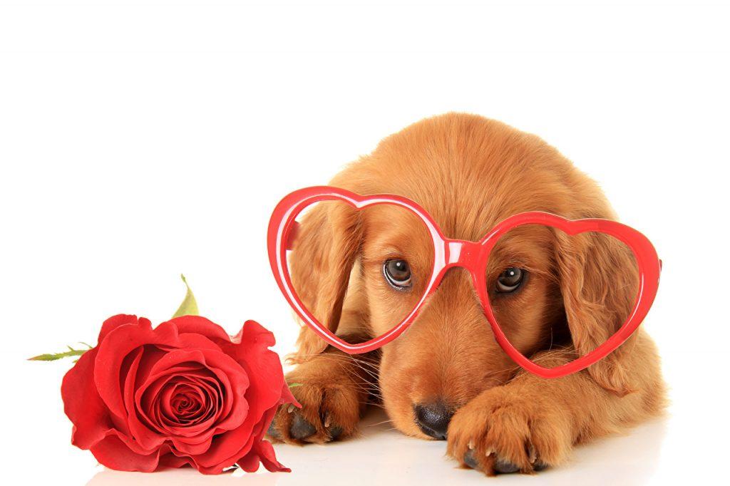 День Святого Валентинав англия