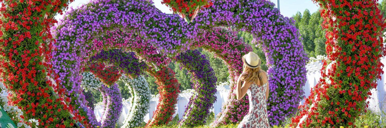 Miraclegarden